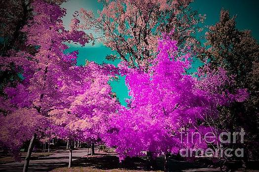 Pink Maple by R Mahlouji