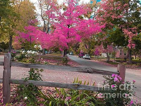 Pink maple tree by R Mahluji