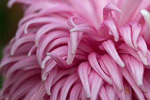 Pink Mum by Jim Gillen