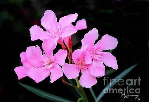 Pink Oleander by Mariarosa Rockefeller