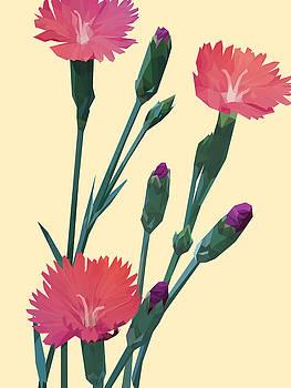 Pink on Cream by David Lange