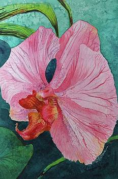 Donna Pierce-Clark - Pink Orchid