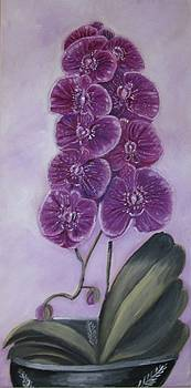 Pink Orchid by Rebecca Jackson