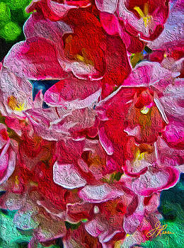 pink Orchids  by Joan Reese