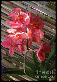 Pink Orchids on Bamboo Wall by Dora Sofia Caputo Photographic Art and Design
