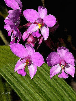 Pink Painted Orchids by Rosalie Scanlon