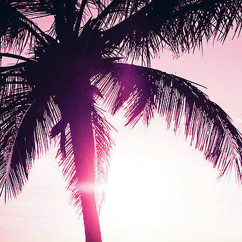 Pink Palm Tree Silhouettes Kihei Tropical Nights by Sharon Mau