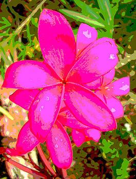Pink Panther by Farah Faizal
