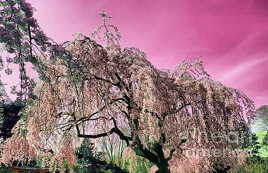 Onedayoneimage Photography - Pink Paradise