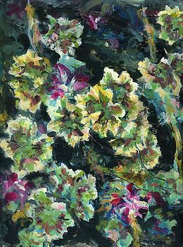 Pink Pelargonium by Alexandra Cook