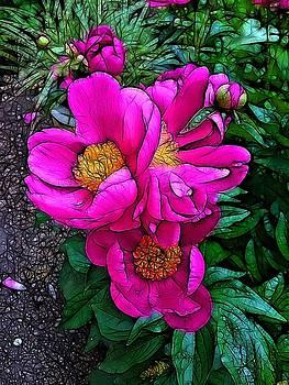 Nick Heap - Pink Peonies