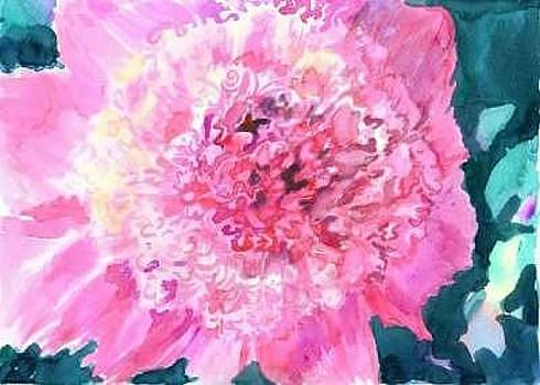 Pink peony by Mousumi Mani