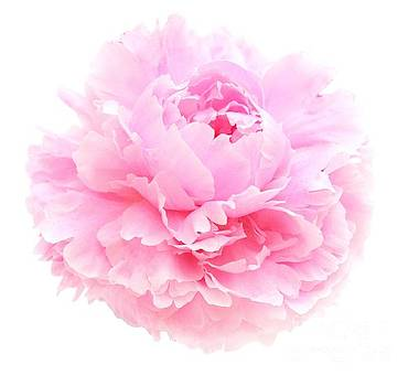 Pink Peony by Susan Wall