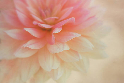 Pink Petals by Kathleen Clemons