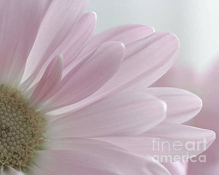 Pink Petals by Linda Hoye