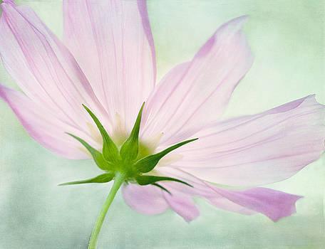 Pink Petals  by Marina Kojukhova