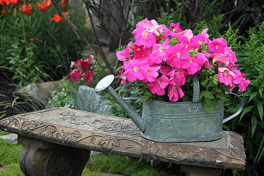 Sandra Foster - Pink Petunias In Watering Can
