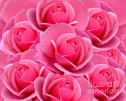 Pink Pink Roses by Julia Underwood