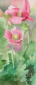 Pink Poppies by Amy Larsen