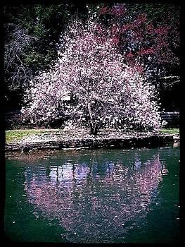 Pink Quietude by Wendy Bechtold