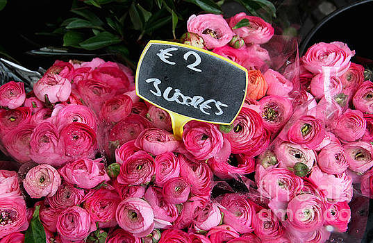 Pink Ranunculus for Sale by Julia Willard