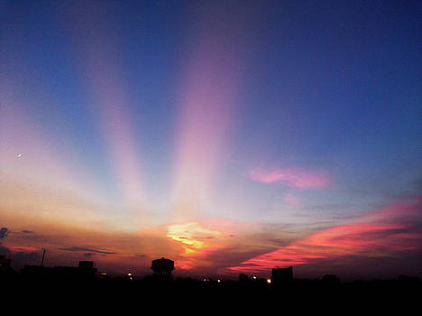 Pink rays by Atullya N Srivastava