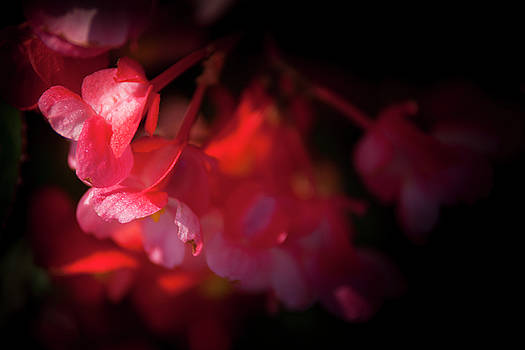 Pink/Red Flowers Horizontal by Mason Resnick