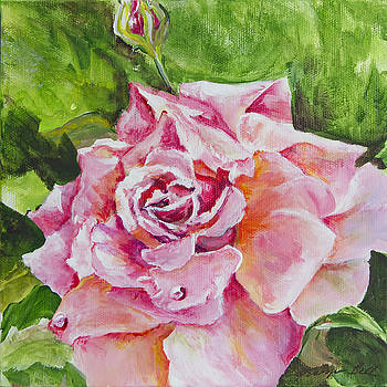 Pink Rose by Carolyn Bell