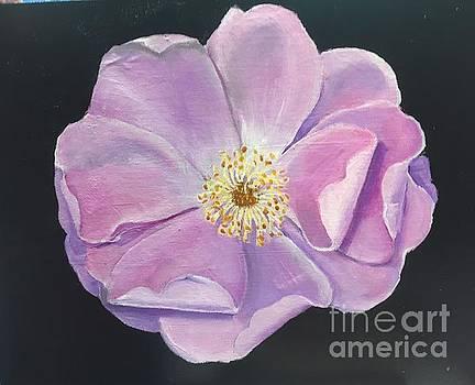 Pink Rose by Elaine Callahan