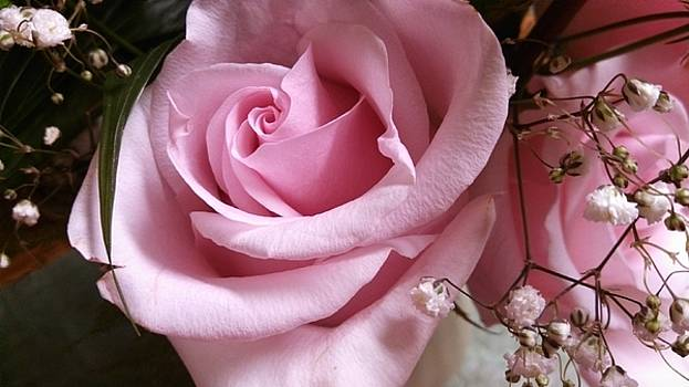 Pink Rose Heavenscent 2 by Muri McCage