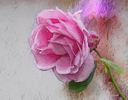 Pink Rose by Joe Halinar