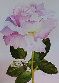 Pink Rose by Pat Gerace