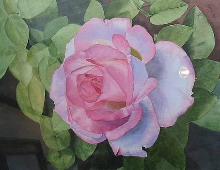 Pink Rose by Robert Gregg
