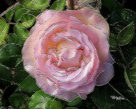 Pink Rose Softness #058 by Barbara Tristan