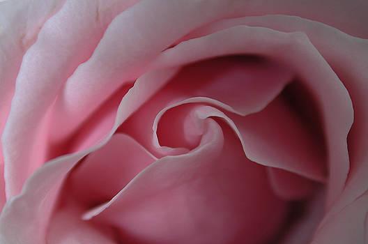 Kathi Shotwell - Pink Rose Swirl