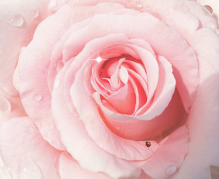 Pink Rose With Rain Drops by Diane Schuster