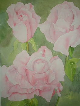 Pink Roses by Sandra Woods