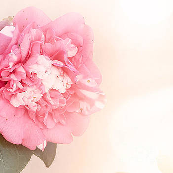 Pink ruffled camellia by Cindy Garber Iverson