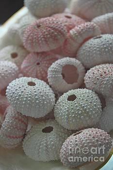 Paulette Thomas - Pink Sea Urchins