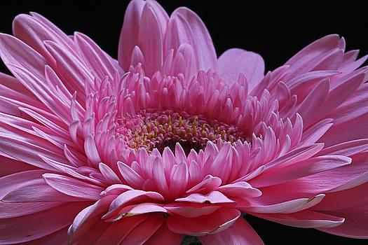 Pink Splendor by Juergen Roth