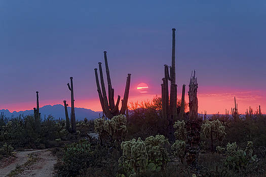 Pink Sun Setting by Ryan Seek
