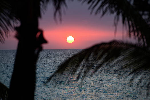 Reimar Gaertner - Pink sunset over the Atlantic Ocean in Varadero Cuba with palm t
