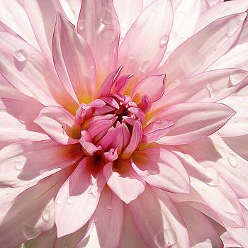 Pink Surprise by Norman Drake
