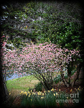 Pink Tree and Daffodils by Eva Thomas