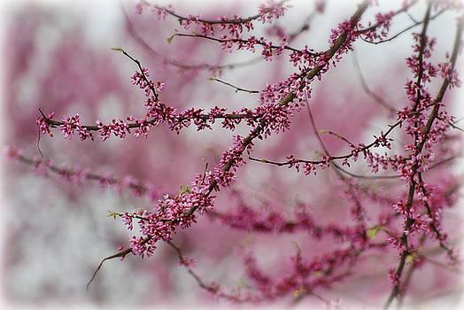Pink Tree Buds by Francie Davis