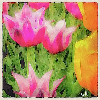 Pink Tulips by Robert Cattan