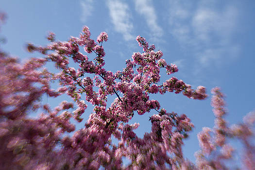 Pink under blue sky by Sharon Wilkinson