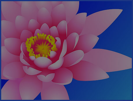 Pink Water Lily by David Strong