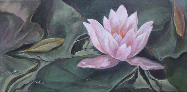 Pink Water Lily by Eve Corin