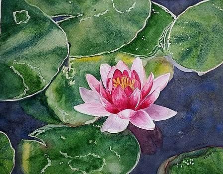 Pink Waterlily by Deane Locke